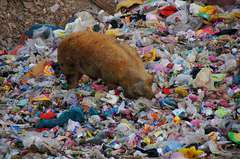 china-garbage-pig-farm-02.jpg
